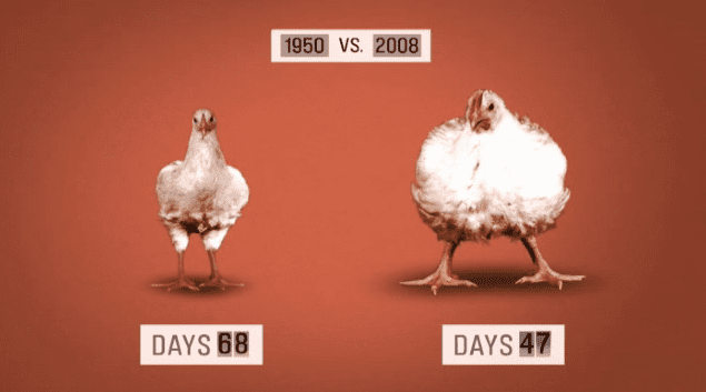 Chicken-Growth