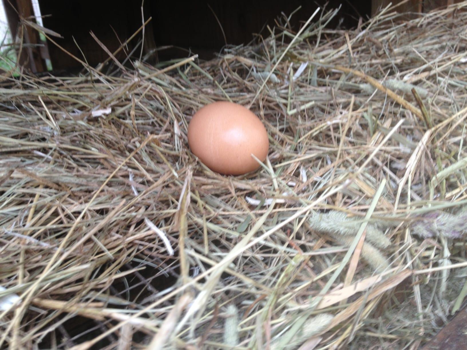 egg nesting box
