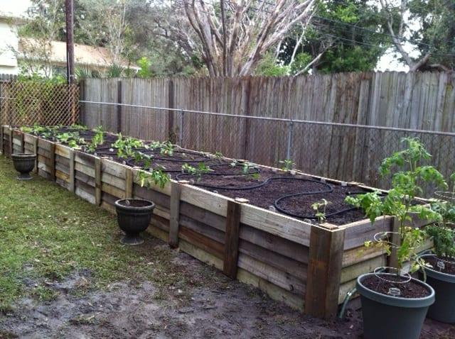 garden bed 5