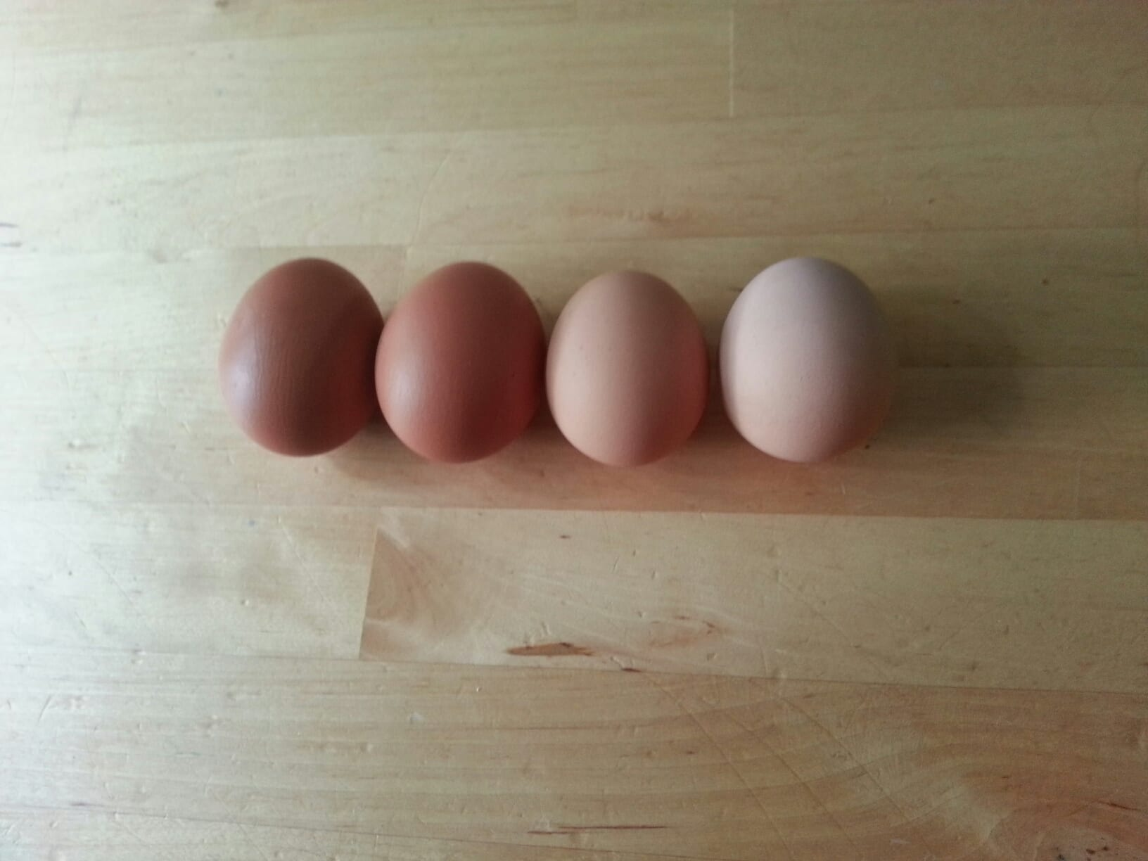 raising backyard chickens how why and what you need live simply