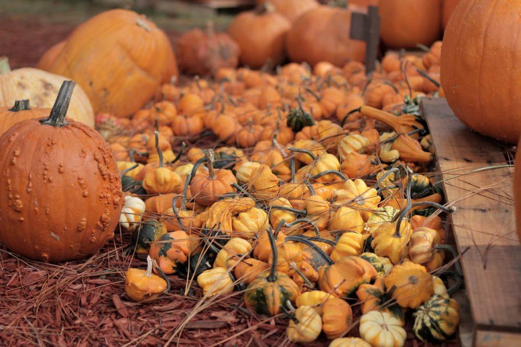 Pumpkin-IMG_9025