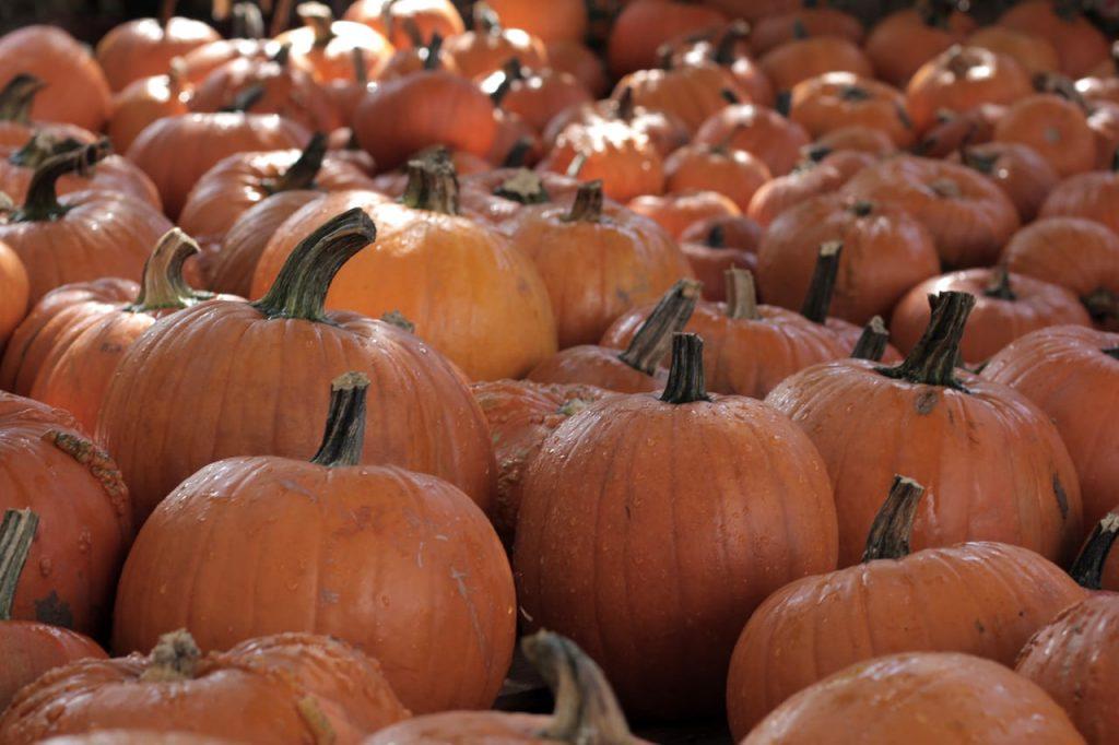 Pumpkin-IMG_9056