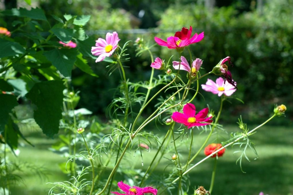 Creating A DIY Wildflower Garden Will Not Only Bring Beauty To Your Yard,  It Can