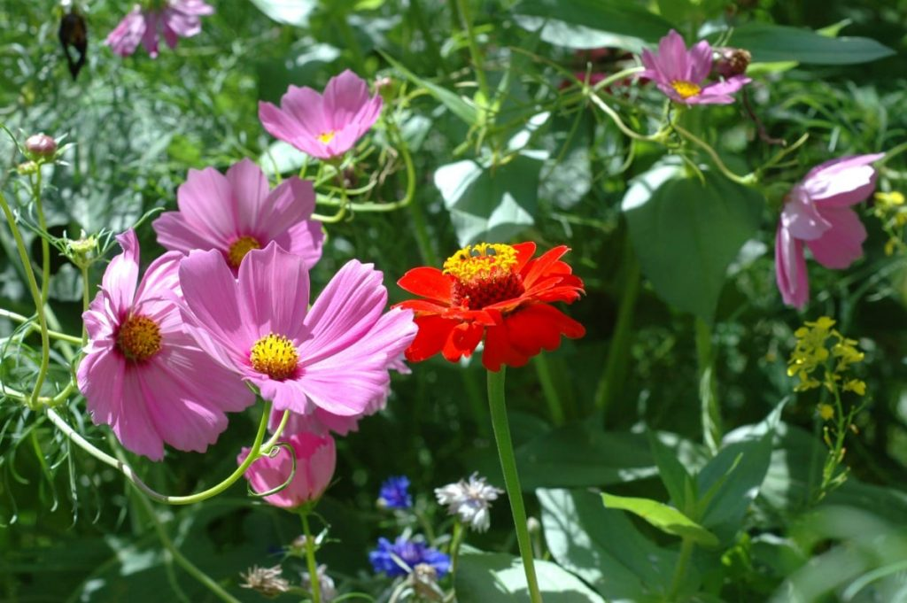 Creating a DIY Wildflower Garden will not only bring beauty to your yard, it can also help with your food garden as well!