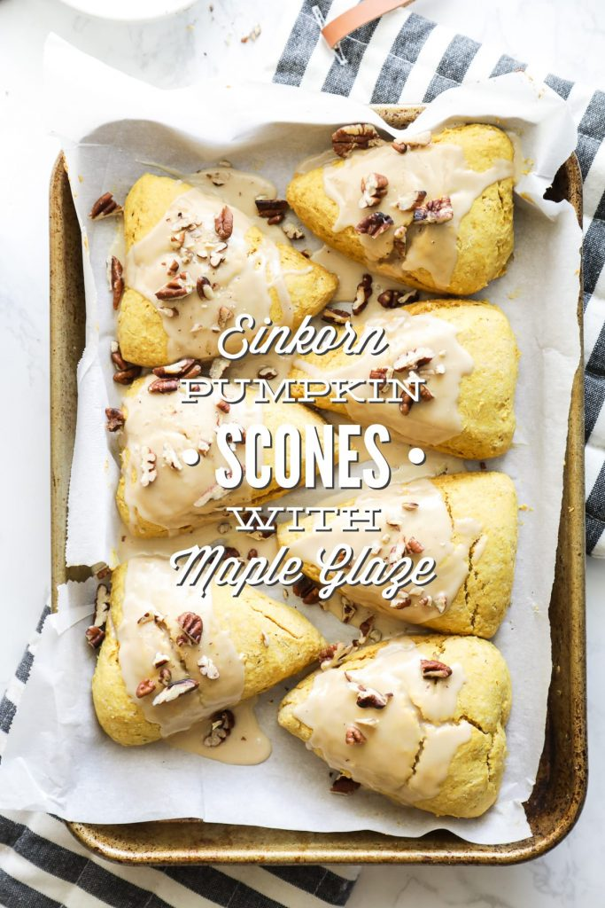 Pumpkin scones made with einkorn flour and naturally-sweetened with honey or maple syrup.