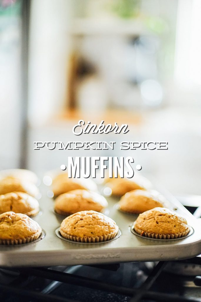 Homemade pumpkin spice muffins made with einkorn flour, pumpkin, a natural sweetener, and pumpkin pie spice.